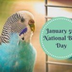 nationalbirdday