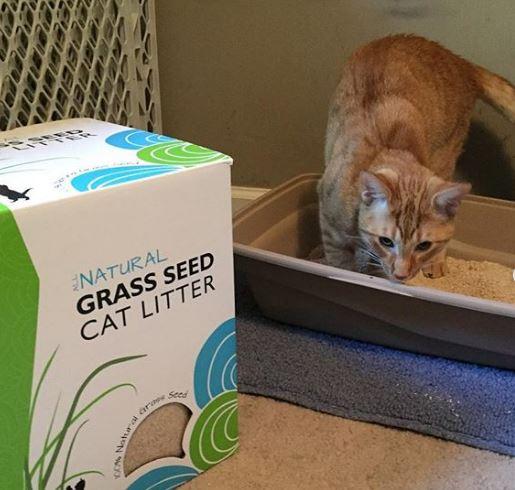 My First Experience With Grass Seed Cat Litter Saving Toward A Better Life Saving